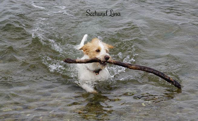 Lina fühlt sich auch im Wasser wohl,