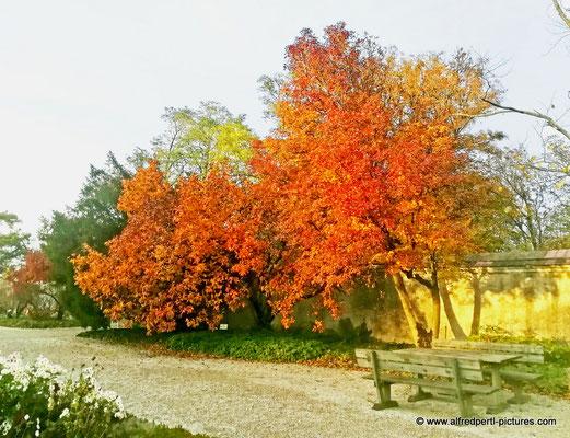 Schallaburg im Herbst