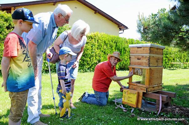 Tag des offenen Bienenstocks beim Fröhlichen Imker Anton Fröhlich in Spillern