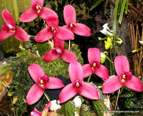 Orichideenausstellung in den Wiener Blumengärten (Hirschstetten)