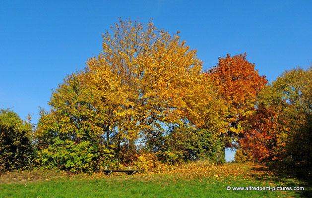 Herbst am Bisamberg