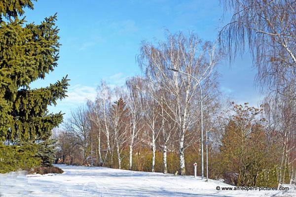Winter in Wilfersdorf