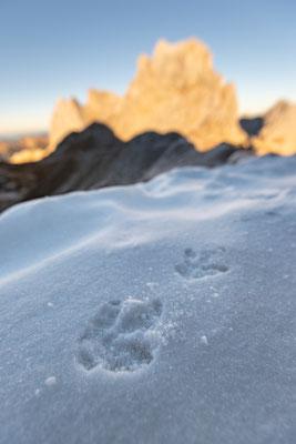Schneehuhnspuren im Schnee, im Hintergrund die westl. Karwendelspitze / Deutschland (Bildnummer 5332)