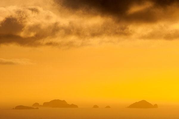 Goldenes Küstenlicht / Neuseeland (Bildnummer 4404)