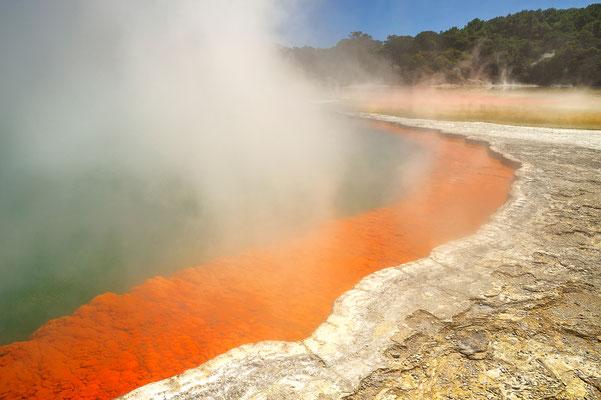 Wai-o-Tapu, eine heiße Quelle bei Rotorua / Neuseeland (Bildnummer 0575_6)