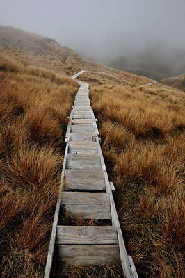 Endlose Treppen am Mt. Taranaki / Neuseeland (Bildnummer 5023)