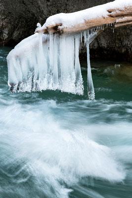 Eiszapfen am Baumstamm III