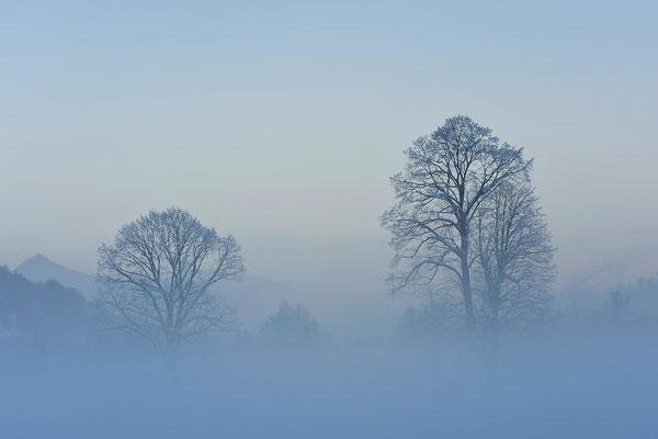 Nebelstimmung bei Bayrischzell / Deutschland (Bildnummer 8204)
