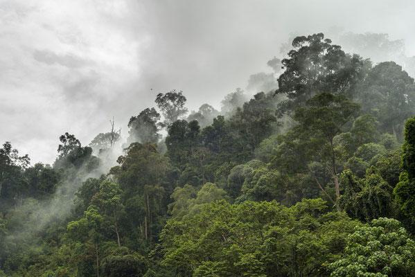 Blick auf den Dschungel in Bukit Lawang / Indonesien (Bildnummer 753339)