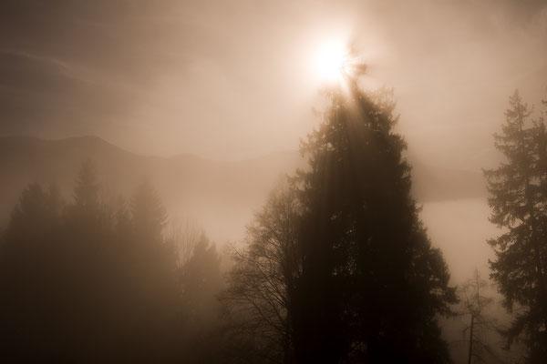 Nebelstimmung im Gegenlicht (Bildnummer 811182)