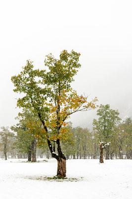 Wintereinbruch Ahornboden 2