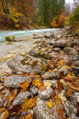 Am Ufer des Rissbaches