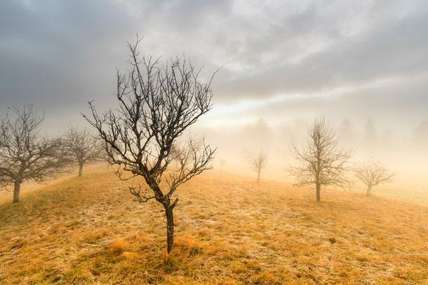 Obsthain im Herbst / Deutschland (Bildnummer 9491)