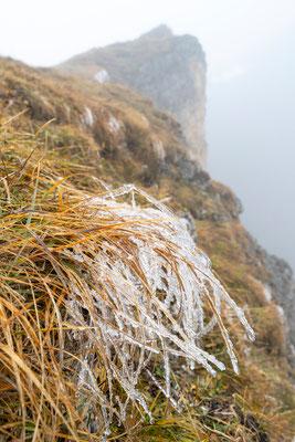 Gefrorenes Berggras