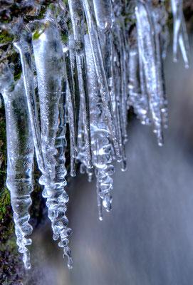 Eiszapfen an einem Zufluss der Isar / Deutschland (Bildnummer 4978)