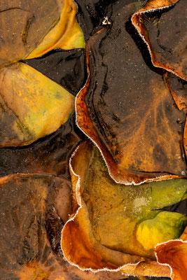 Gefrorene Herbstschönheit II