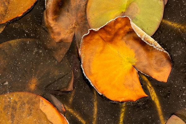 Gefrorene Herbstschönheit I