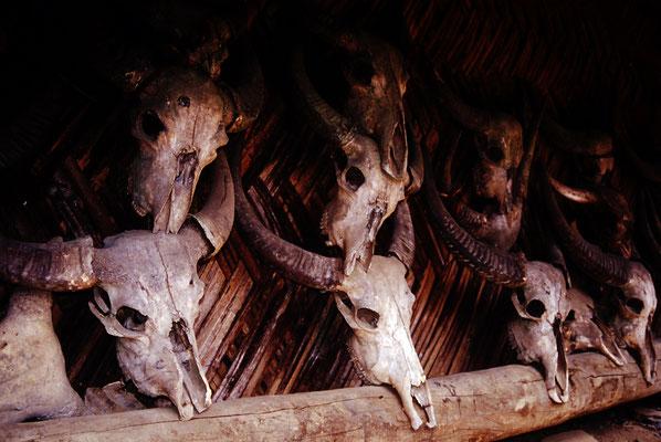 Wasserbüffel wo früher Menschenschädel hingen, Nagaland / Indien (Diafilm Bildnummer 22222)