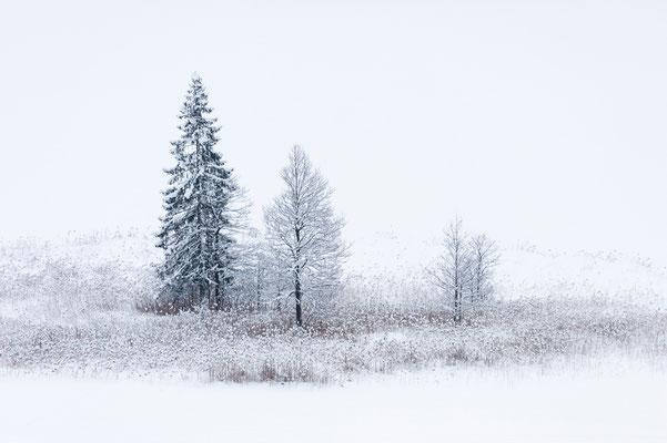 Am winterlichen Ufer des Geroldsees / Deutschland (Bildnummer 7001764)