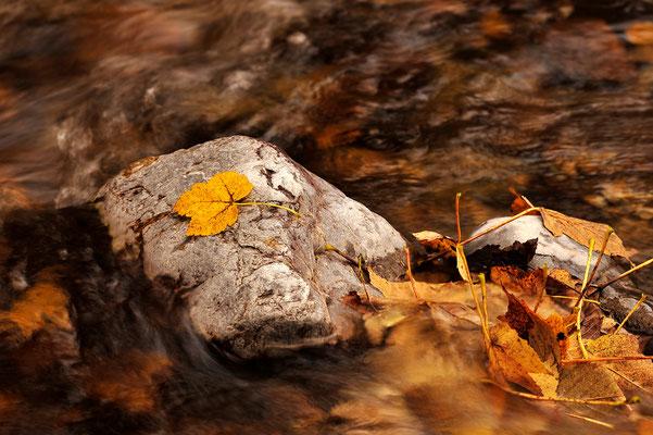 Herbst am Bachlauf / Österreich (Bildnummer 7000964)