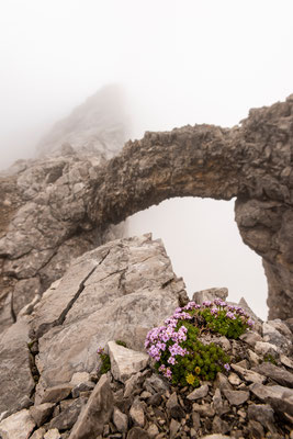 Steinbogen und Alpenblumen im Karwendel / Tirol (Bildnummer 180626_0090)