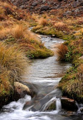 Bachlauf in Tongariro / Neuseeland (Bildnummer 5894)