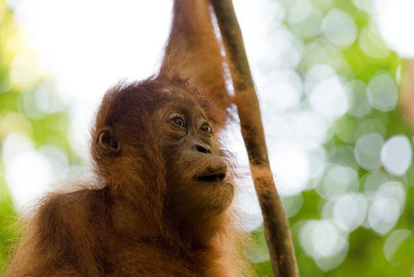 Im Gegenlicht / Indonesien (Bildnummer 3921)