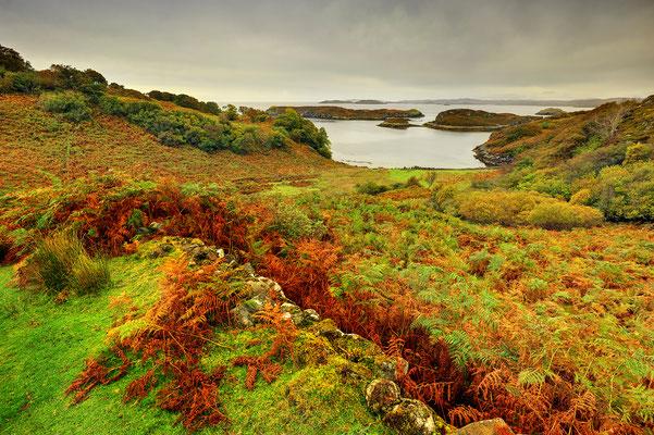 Farnlandschaft in Schottland (Bildnummer 111001_0948)