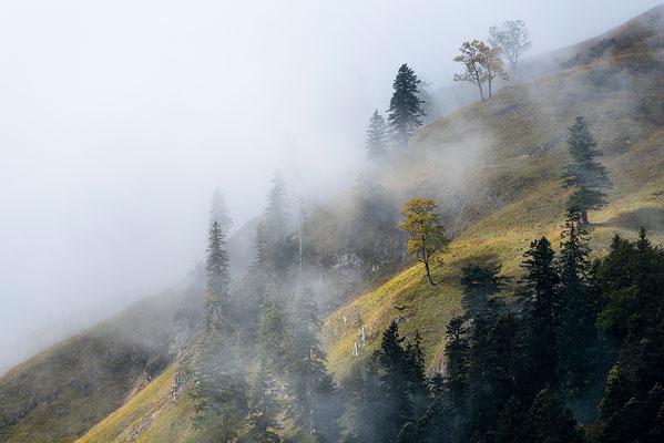 Karwendel im Nebel / Österreich (Bildnummer 7618)