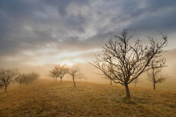 Obstbäume im Herbst / Deutschland (Bildnummer 9511)