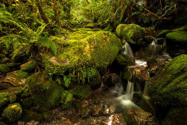 Kleiner Wasserfall im Fjordland / Neuseeland (Bildnummer 3722)