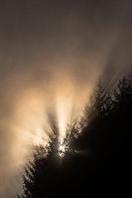 Aufgehende Sonne am Waldrand / Deutschland (Bildnummer 8174)