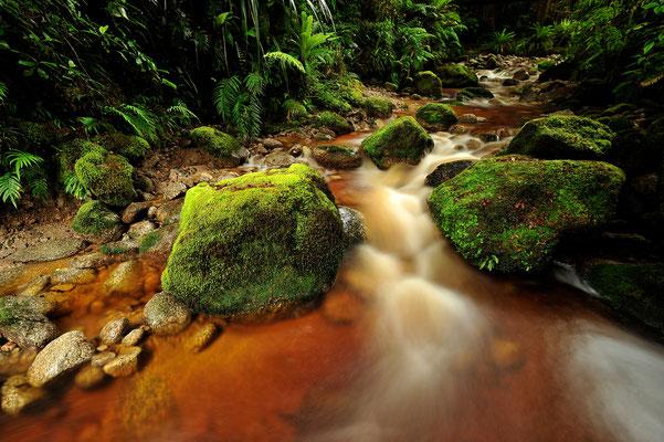 Bachlauf im Dschungel / Neuseeland (Bildnummer 5660)
