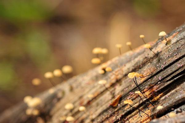 Makro Leben auf einem Palmenstamm / Neuseeland (Bildnummer 5763)