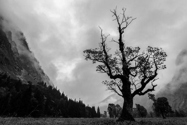 Ahornboden bei Schlechtwetter / Österreich (Bildnummer 7596)