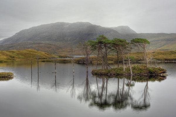 Bäume am Loch Assynt / Schottland (Bildnummer 111001_0959)