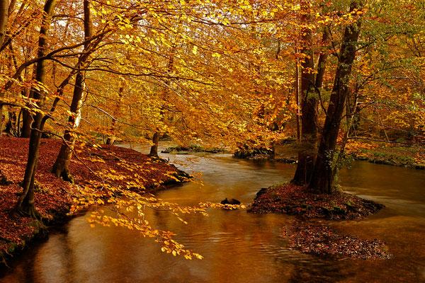 Herbst an der Würm bei München / Deutschland (Bildnummer 091027_3579)