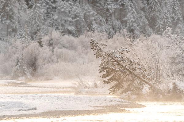 Winterlicht an der Isar