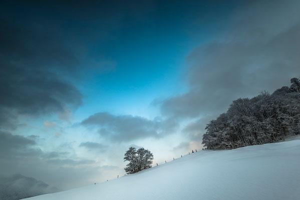 Weide im Winter / Deutschland (Bildnummer 1572)