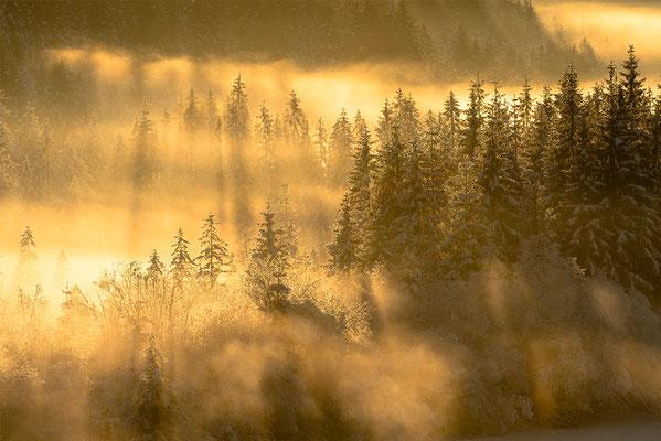 Nebelstimmung an der Isar bei Wallgau / Deutschland (Bildnummer 0867 )