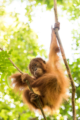 Im Dschungel / Indonesien (Bildnummer 3935)