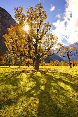Licht und Schatten am Ahornboden / Österreich (Bildnummer 121011_2951)