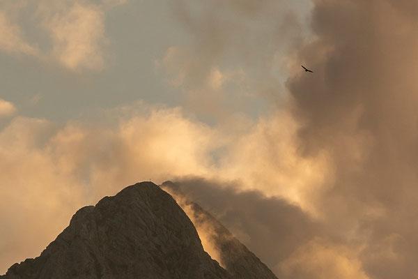 Ausschnitt vorheriges Bild - Wer genau schaut, sieht auch den Adler