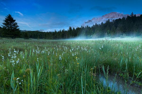 Nebel im Sumpf, im Hintergrund das Karwendel / Deutschland (Bildnummer 170604_0371)