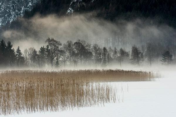 Nebelstimmung am Ufer des Achensee (Bildnummer 8865)