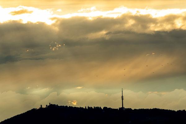 Vogelschwarm über dem abendlichen Peißenberg