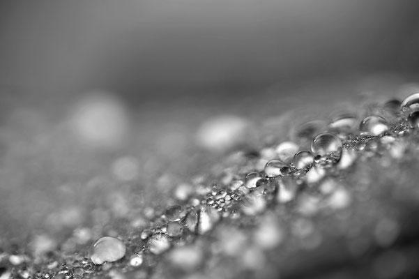 Regentropfen auf einem Stein / Deutschland (Bildnummer 100310_2257)