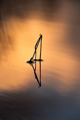 Schild und Fliegen im Abendrot, teil einer Serie / Deutschland (Bildnummer 17_4563)