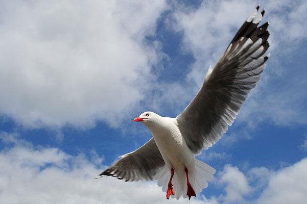 Landeanflug / Neuseeland (Bildnummer 4248)