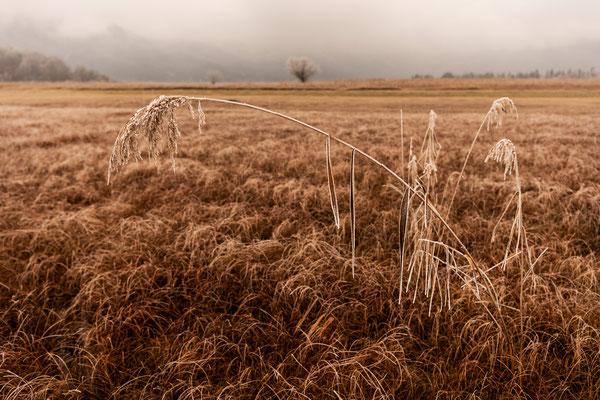 Der Halm, Raureif im Moor